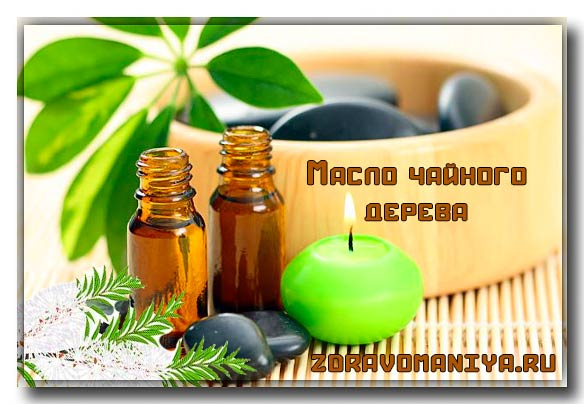 эфирное масло чайного дерева для лечения болезней